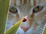 cat and ladybug