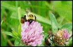 The Beetles and The Bees