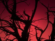 Tree against red sky