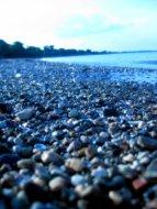 Rocky Shore II