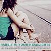 Rabbit in Your Headlights