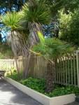 Gateway Pool Palms