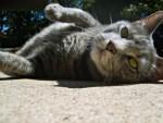 kitty :]