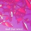 Feel that wind