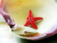 starshell